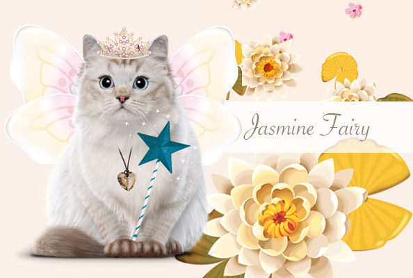 Fall / Winter Collection Decoration Teo Jasmin